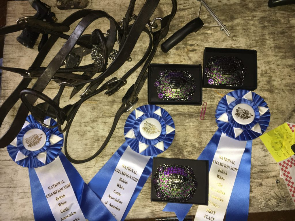 awards including ribbons and belt buckles on a show trunk
